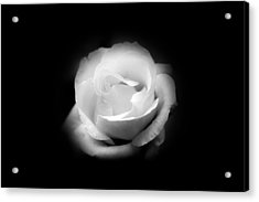 Acrylic Print featuring the photograph White Rose Petals by Anthony Rego