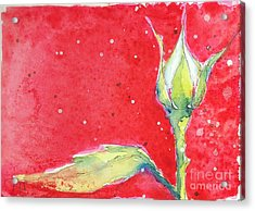 White Rosebud Acrylic Print