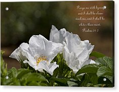White Roses - Purge Me With Hyssop Acrylic Print by Kathy Clark