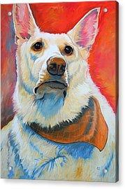White Shepherd Acrylic Print