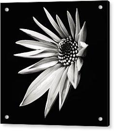 White Star Acrylic Print by Jaromir Hron