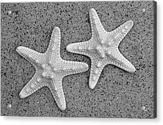White Starfish In Black And White Acrylic Print by Sandi OReilly