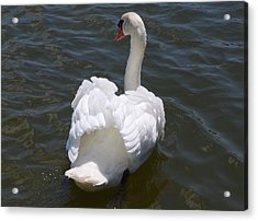 White Swan Acrylic Print by Carrie Munoz