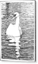 White Swan Acrylic Print by Muna Abdurrahman