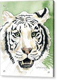 White Tiger Acrylic Print by Mark Jennings