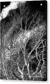 White Tree Wave Acrylic Print by John Rizzuto