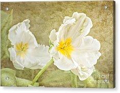 White Tulips Acrylic Print by Cheryl Davis