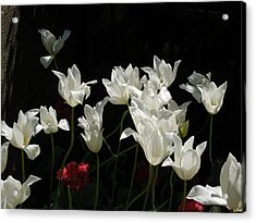 White Tulips On Black Acrylic Print by Peg Toliver