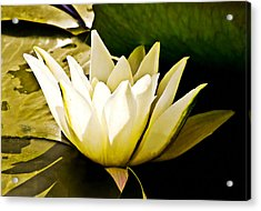 White Water Lily Acrylic Print by Design Windmill