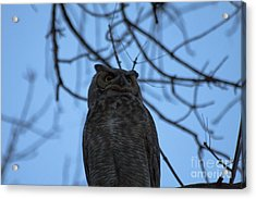 Who 2 Acrylic Print by Scotts Scapes