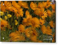 Who Has Seen The Wind Acrylic Print by Bob Christopher
