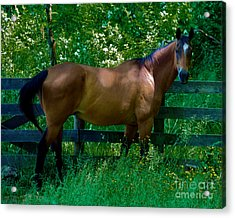 Who You Looking At Acrylic Print