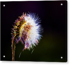 Wicked Weed On Black Acrylic Print by Bill Tiepelman