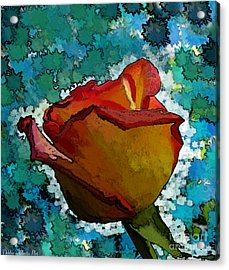 Wild And Crazy Rose Bud Acrylic Print by Debbie Portwood
