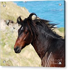 Wild And Free Acrylic Print by Johanne Peale