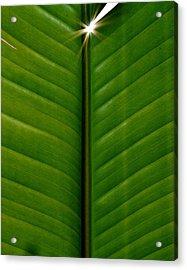 Acrylic Print featuring the photograph Wild Banana Leaf by Werner Lehmann
