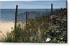 Wild Beach Rose - Cape Cod Acrylic Print