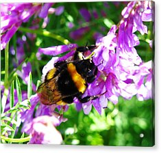 Wild Bee On Flower Acrylic Print by Andonis Katanos