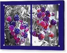 Wild Berries Diptych Acrylic Print by Steve Ohlsen