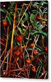 Wild Berries Acrylic Print by Ellen Heaverlo