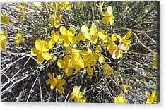 Acrylic Print featuring the photograph Wild Desert Flowers by Kume Bryant
