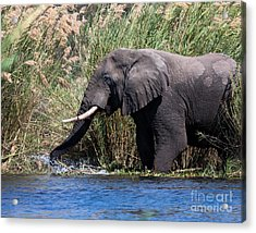 Acrylic Print featuring the photograph Wild Elephant Splashing In Water by Karen Lee Ensley