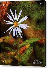 Wild Flower Acrylic Print by Billie-Jo Miller