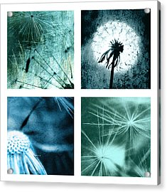 Wild Flower Dandelion Acrylic Print by Falko Follert