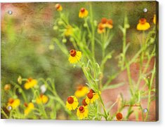 Acrylic Print featuring the photograph Wild Flowers by Joan Bertucci