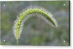 Wild Grass Acrylic Print by David Lester