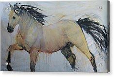 Wild Horse 1 2012 Acrylic Print