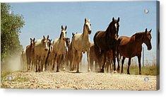 Wild Horses Acrylic Print by Antonio Arcos Aka Fotonstudio Photography