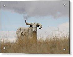 Wild Longhorn Acrylic Print