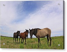 Acrylic Print featuring the photograph Wild Mustangs On The High Plains by Kate Purdy