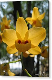 Wild Orange Yellow Orchid Flower Acrylic Print by Gary Heiden