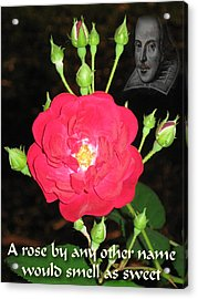 Wild Rose And The Bard Acrylic Print by Terry Lynch
