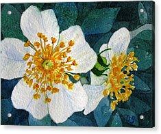 Wild Roses Acrylic Print by Debra Spinks