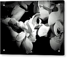 Wild Roses In Black And White Acrylic Print by Beth Akerman