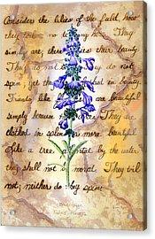 Wild Sage Acrylic Print by Linda Pope