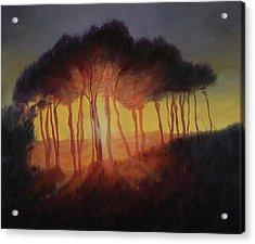 Wild Trees At Sunset Acrylic Print by Antonia Myatt