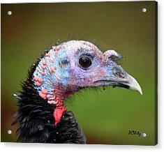 Wild Turkey Acrylic Print by Patrick Witz