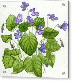 Wild Violets Acrylic Print by Becky Yates