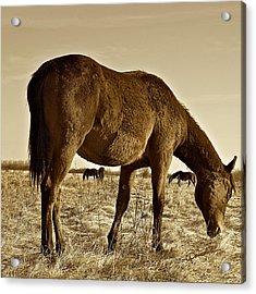 Wild West Acrylic Print