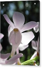 Wild White Orchid Flower Of South East Asia Acrylic Print by Gary Heiden