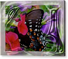 Wild Wings Butterfly Acrylic Print by Debra     Vatalaro