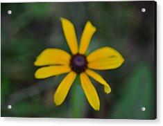 Wildflower Acrylic Print by Mark Stidham