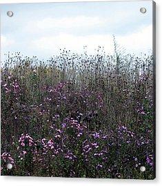 Wildflower Meadow At Markin Glen Acrylic Print by Penny Hunt