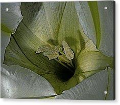 Wildflower Window Acrylic Print by Chris Berry