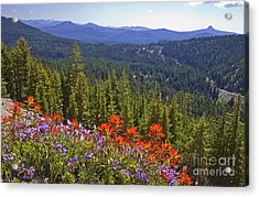 Wildflowers And Mountaintop View Acrylic Print by Ellen Thane and Photo Researchers