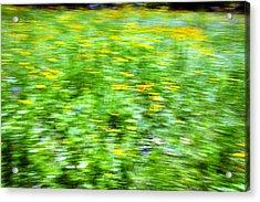 Wildflowers And Wind 2 Acrylic Print by Skip Nall